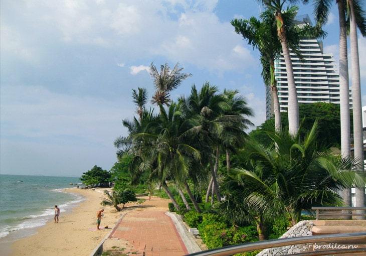 Лето, пальмы
