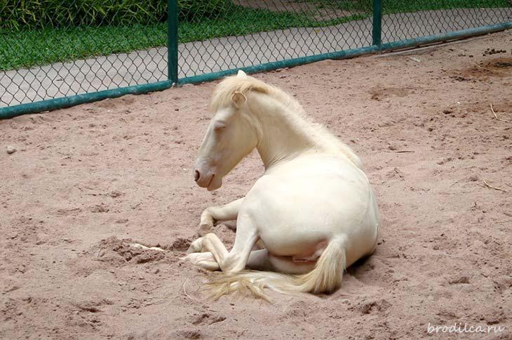 Коллекция животных-альбиносов