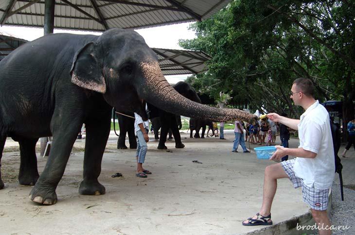 Артём кормит слона