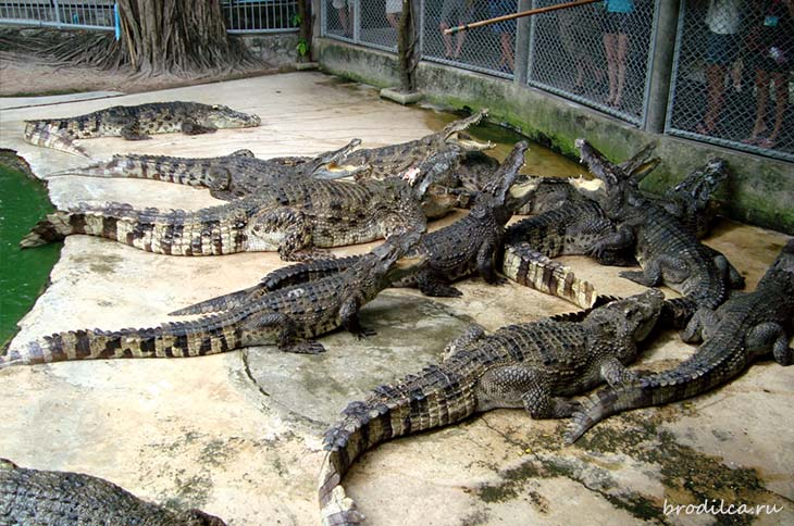 Рептилии в парке