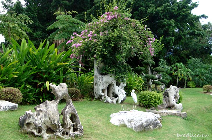В парке собраны растения