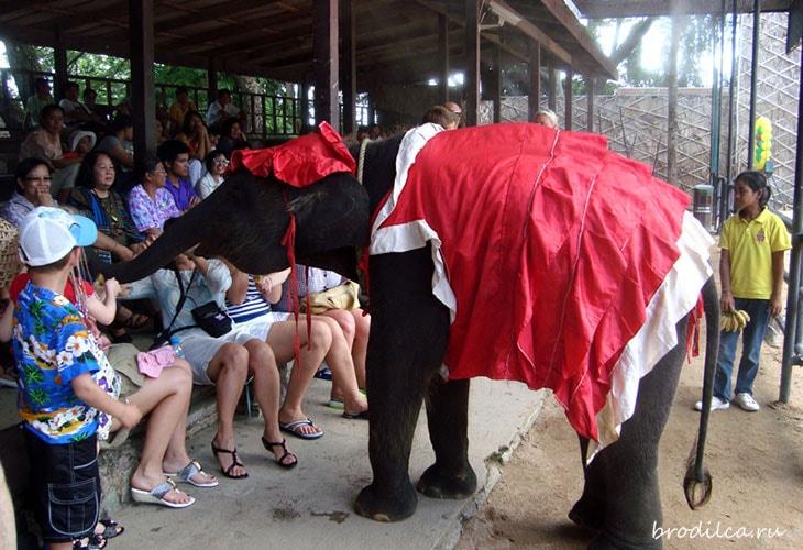 Хитрые слоники