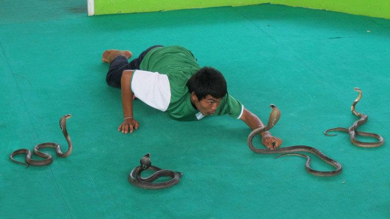 Шоу с участием змей