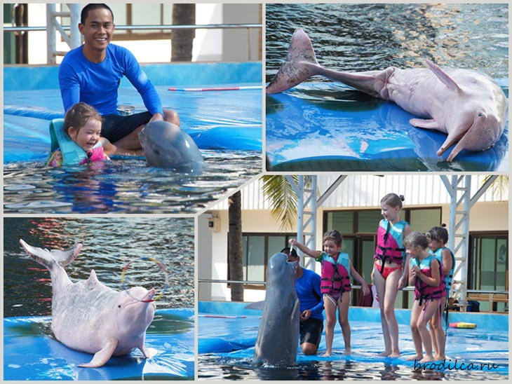 Купание с дельфинами в паттайе