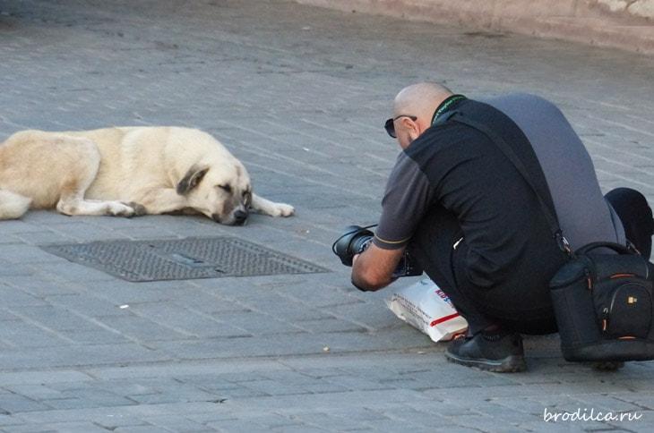 Собаки в Турции