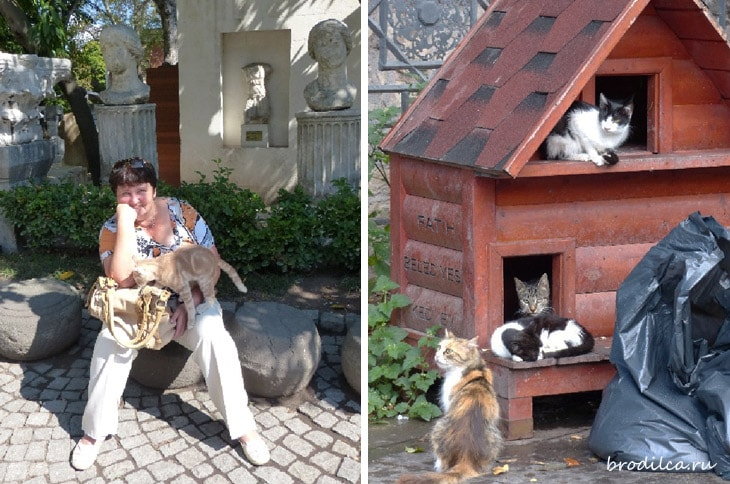 Кошки – хозяева города