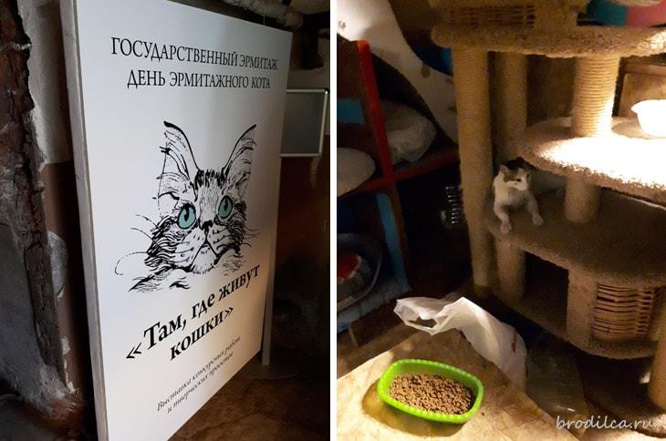 Там, где живут кошки