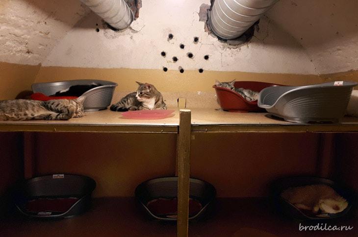 Кошачий кубрик