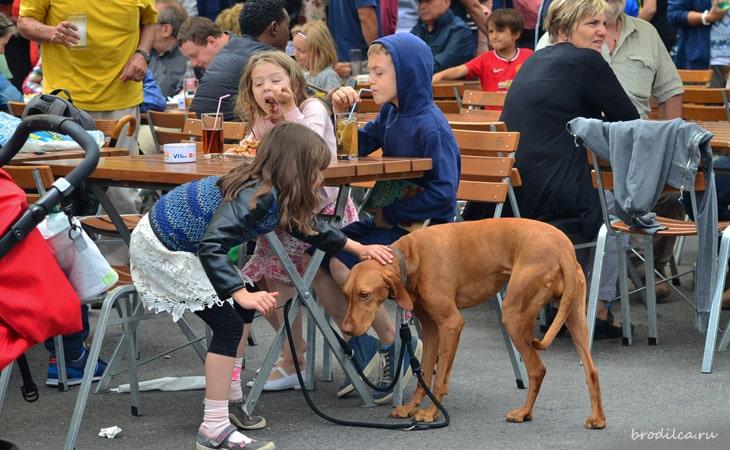 В Европе любят собак